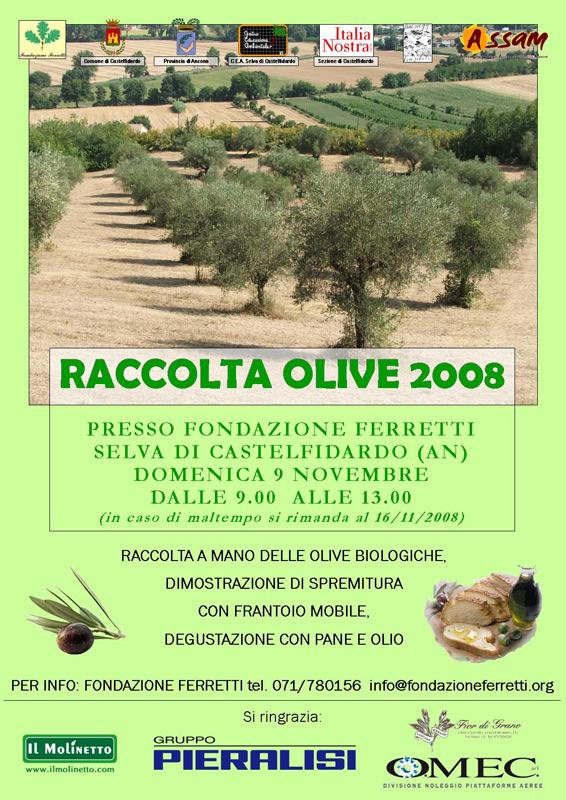 Raccolta olive 2008 e degustazione