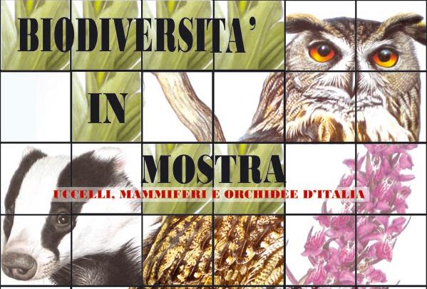 Biodiversità in mostra – Uccelli, mammiferi e orchidee d`Italia