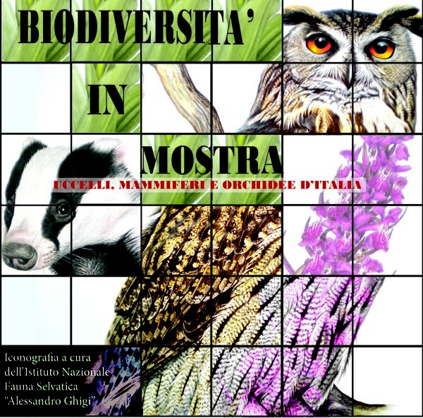 """Biodiversità in mostra – Uccelli, mammiferi e orchidee d`Italia"""
