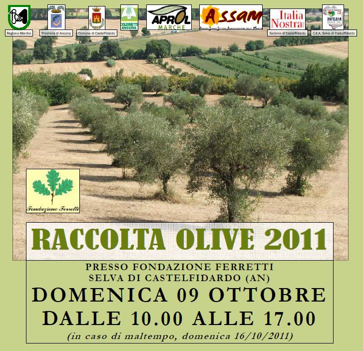 Raccolta Olive 2011
