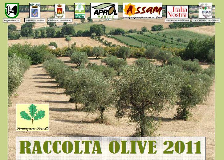 Raccolta delle olive 2011