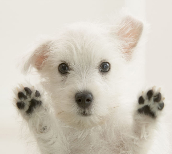 Abbandoni estivi, per i cani obbligo di microchip