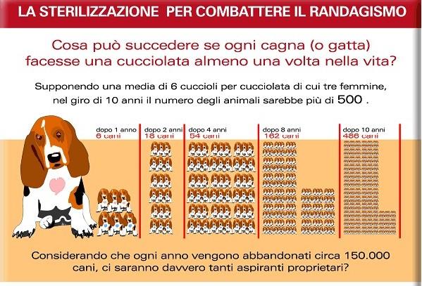 Sterilizzazione di cani e gatti, numeri positivi