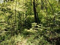 """""""La selva ed i briganti"""", una domenica magica"""