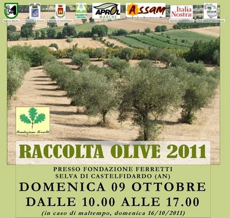 Raccolta delle olive con la fondazione Ferretti