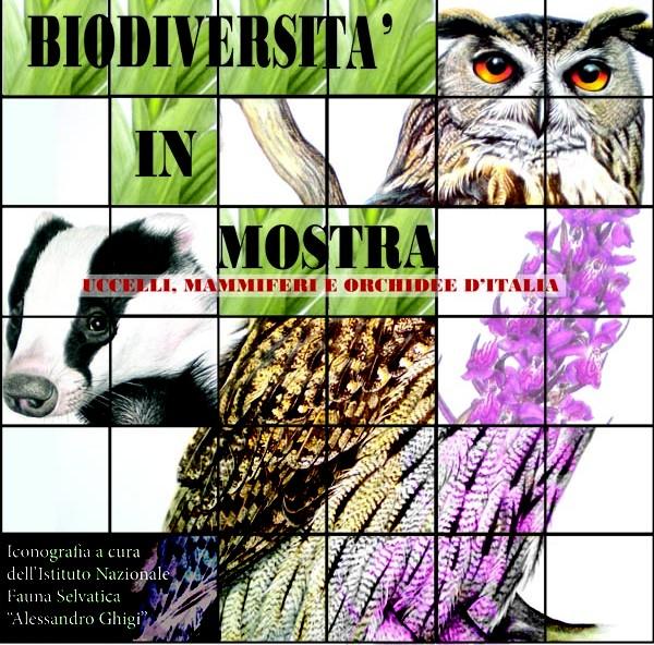 Biodiversità in mostra in Auditorium