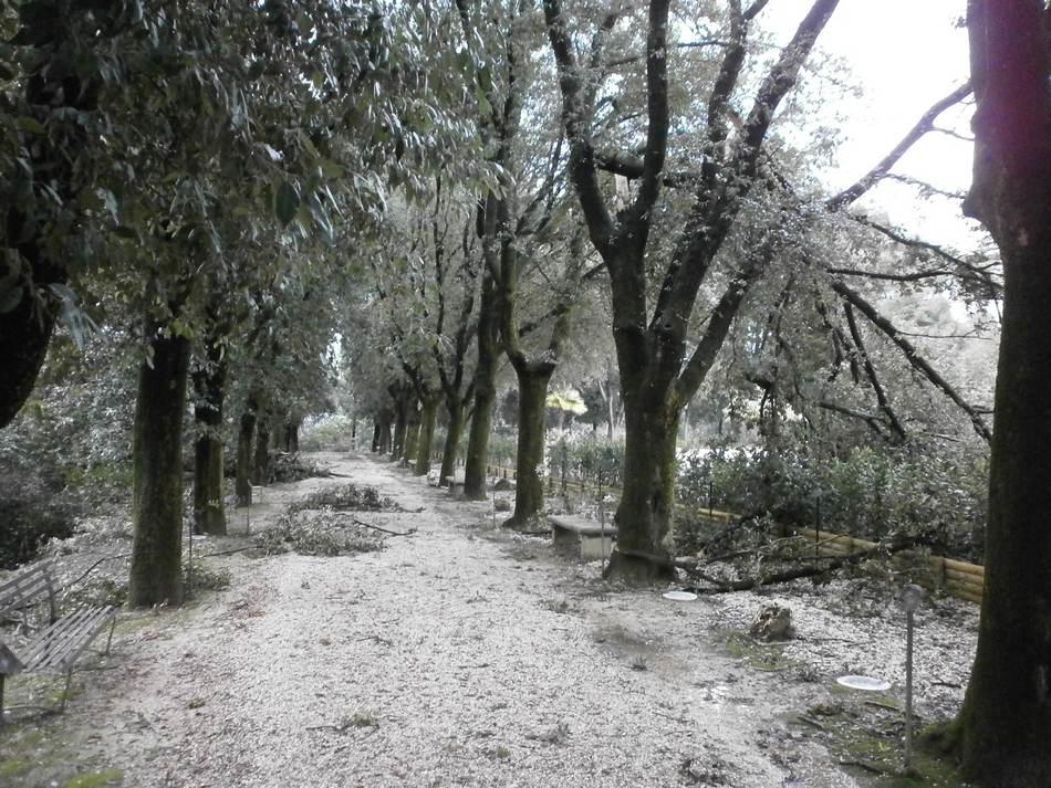 Raccolta legna nel Parco del Monumento