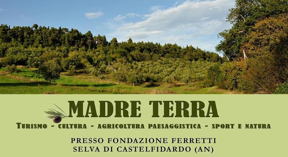 """""""Madre terra"""", torna la raccolta delle olive"""