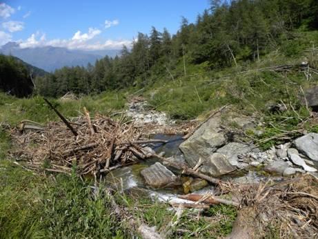 Raccolta legna a terra in aree demaniali fluviali