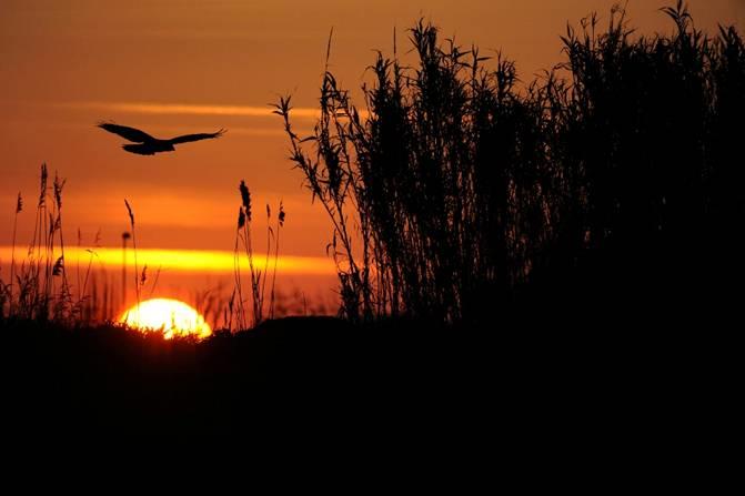 """Le ali del Musone per le """"Conversazioni in giardino"""""""