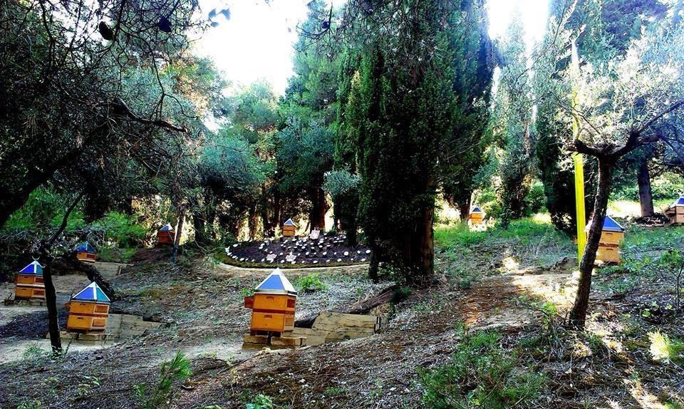 Le api tra uomo e natura alle Conversazioni