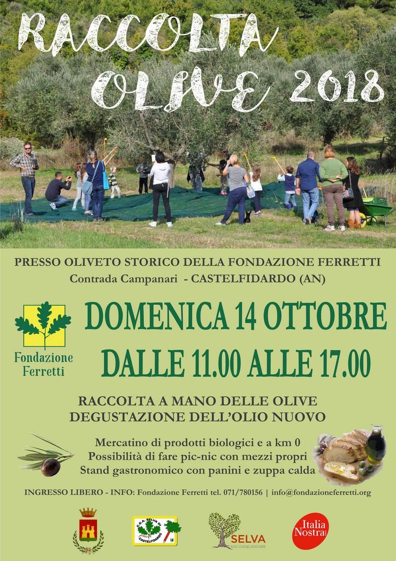 Raccolta delle olive presso la Fondazione Ferretti