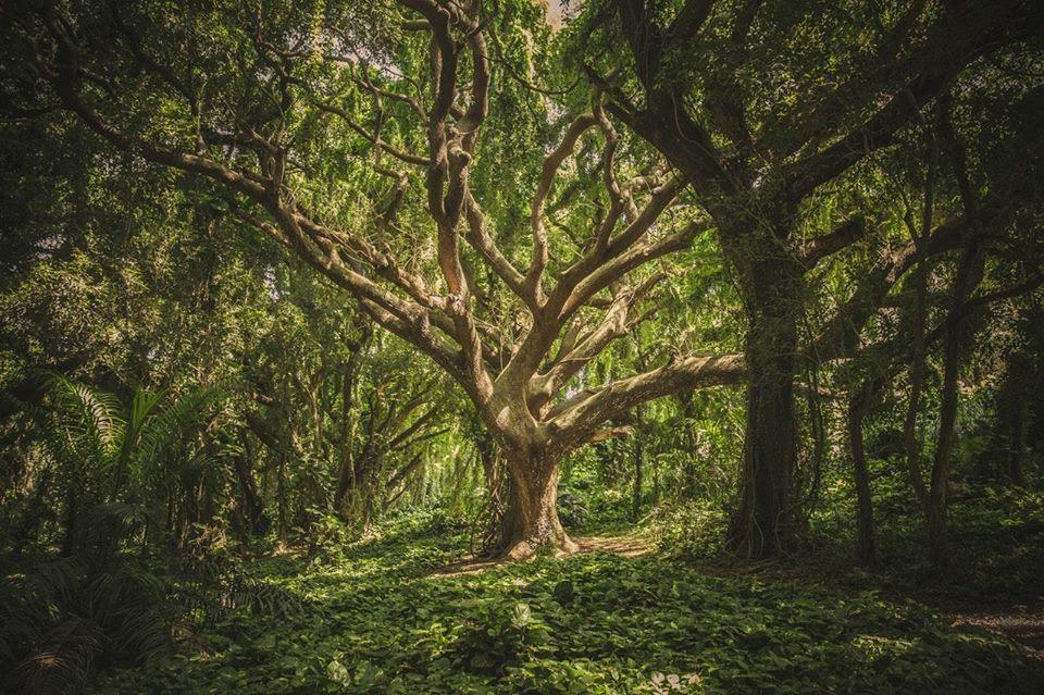 """5 alle 7, camminata per """"I semi dell`albero"""""""